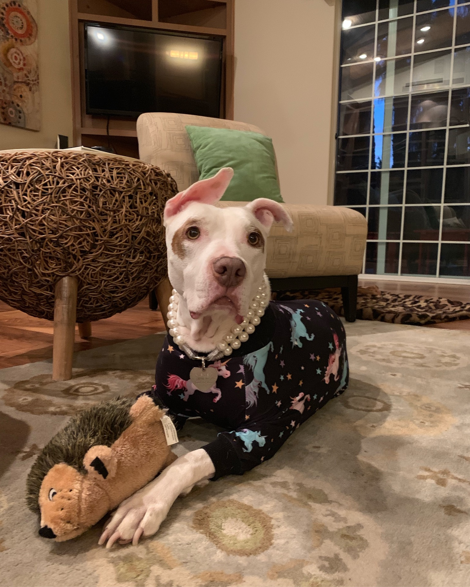 Sophie, white pit bull in unicorn pajamas - Oberg Law Group APC